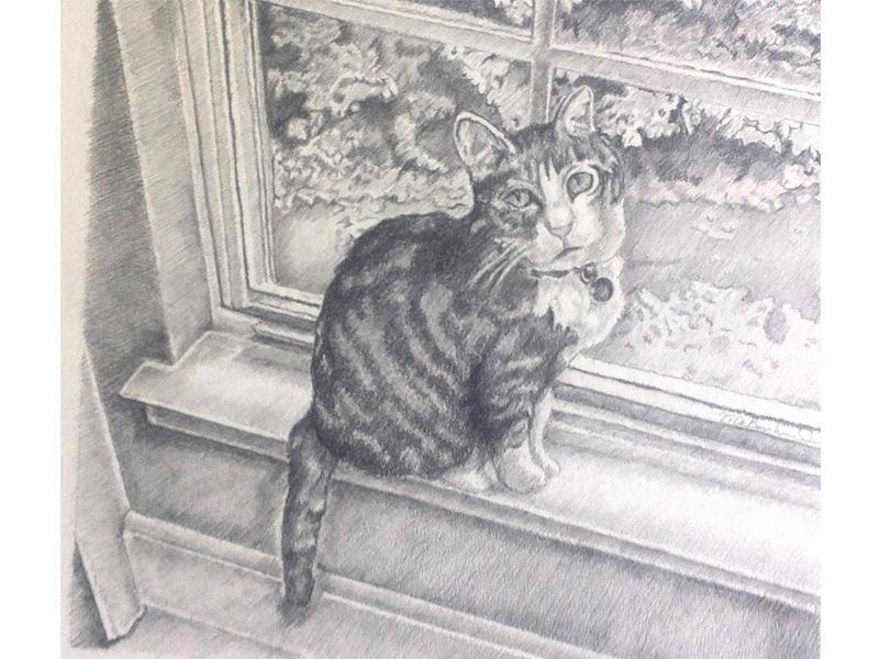 Cat on windowsill