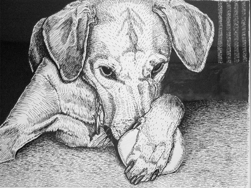 pen and ink of dog with ball